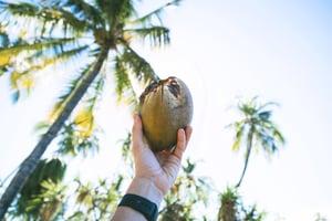 Coconut | IFIS Publishing