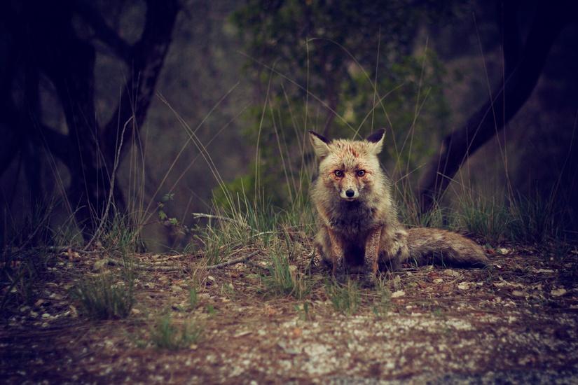 Fox | IFIS Publishing