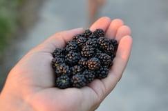 blackberry-2340884_1280.jpg